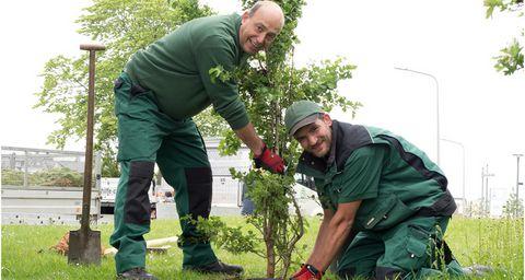 Zwei Männer pflanzen einen Baum