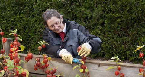 Eine Frau beschneidet Blumen im Garten